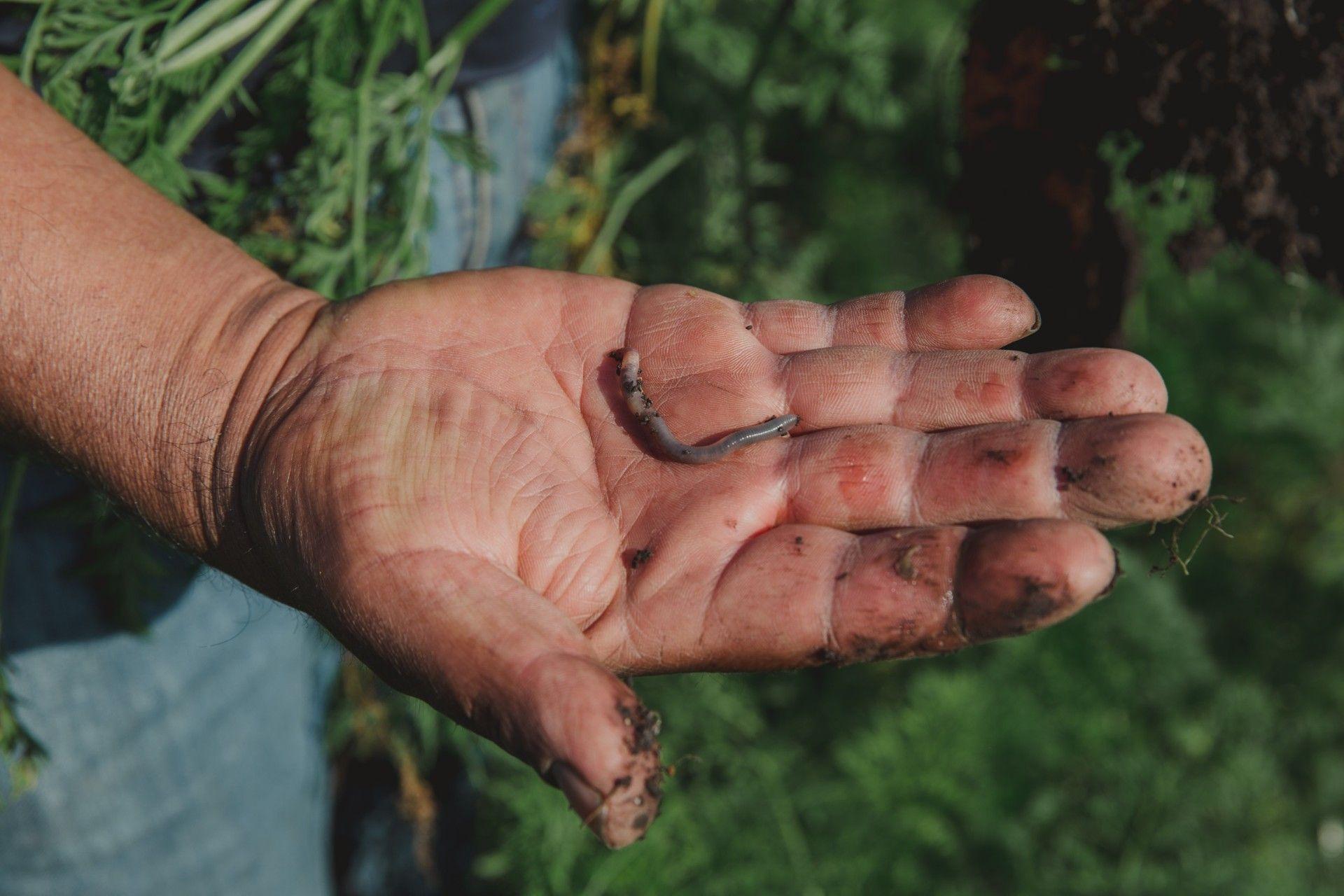Si en la tierra hay gusanos, la tierra es fértil